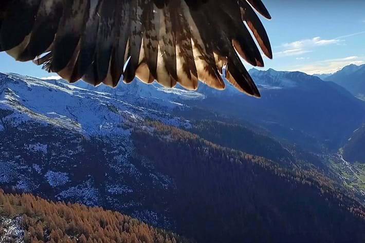 Eagle -drone _2015_11_25