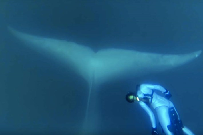 blue whale-page-2015-11-30
