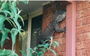 It's just another day in Australia when you find a 5ft goanna lizard chilling in your backyard