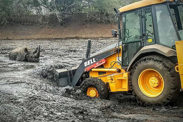 Black rhino stuck in mud 2015-12-04