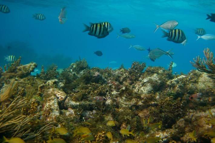 coral reef_2015_12_11