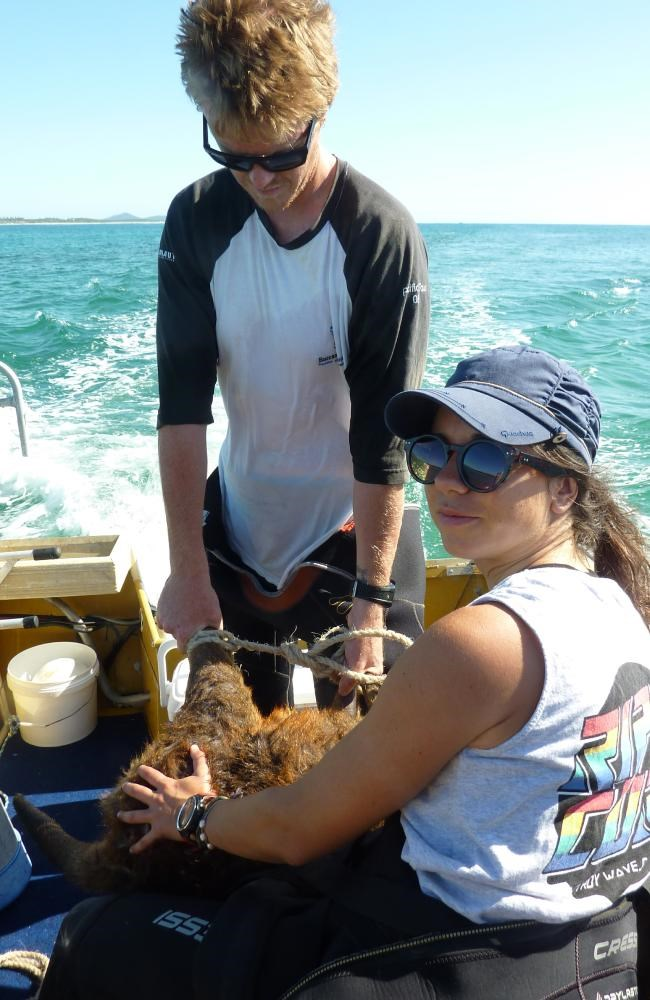 Wallaby Rescue Boat 2015 12 14