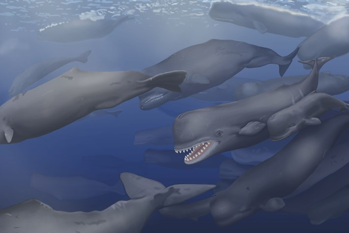 Prehistoric 'white whale' named after Moby Dick