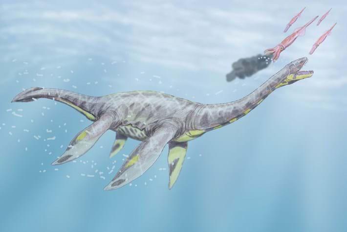 Seeleysaurus Plesiosaur 2015 12 18