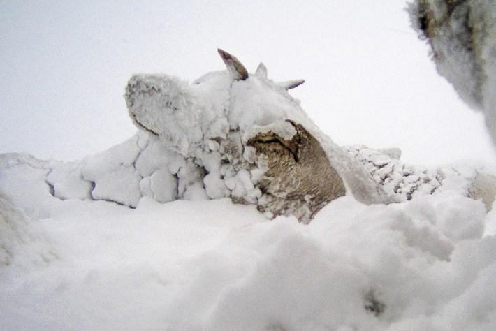 reindeer-3-2015-12-22