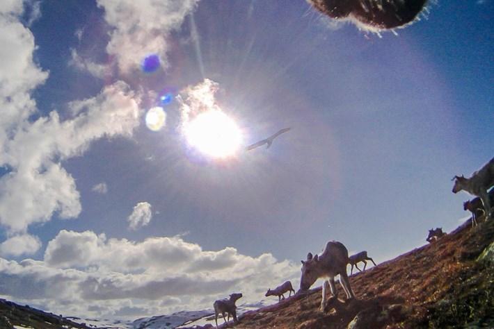 reindeer-4-2015-12-22
