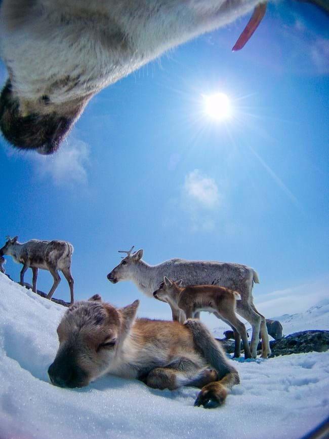 reindeer-6-2015-12-22