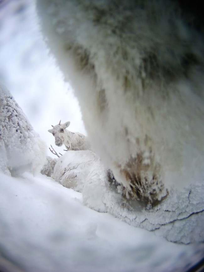 reindeer-7-2015-12-22