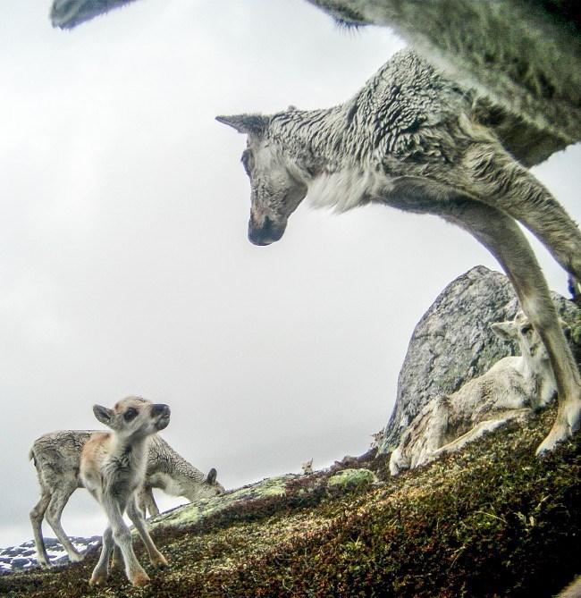 reindeer-8-2015-12-22