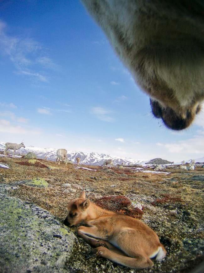 reindeer-9-2015-12-22