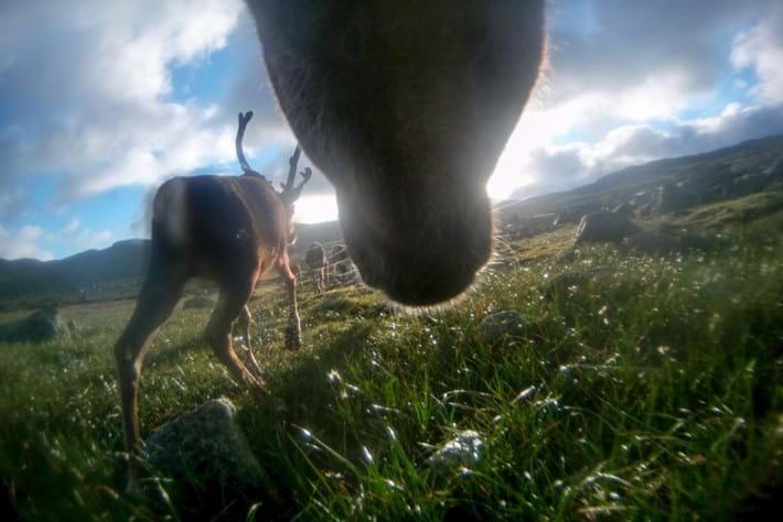 reindeer-12-2015-12-22