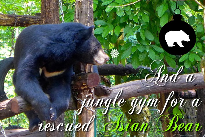 Asian Bear 12 Days 2015 12 23