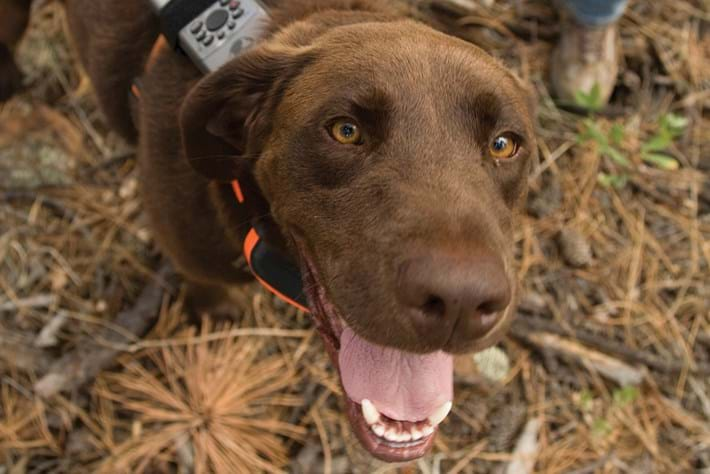 Wildlife Detector Dog1 2016 01 12