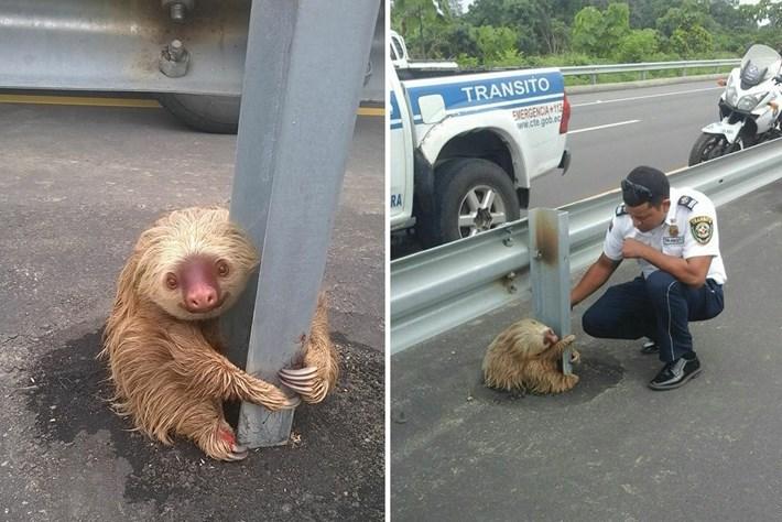 Stuck Sloth Combo 2016 01 25