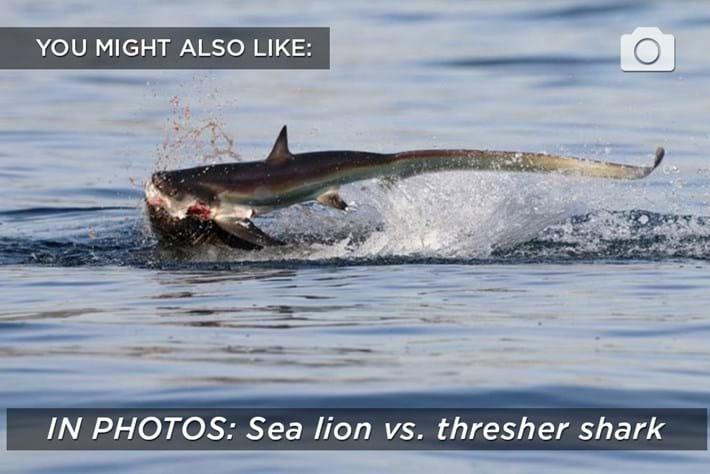 thresher-related-2016-01-29