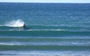 VIDEO: Surfing orca nabs the best wave of the day