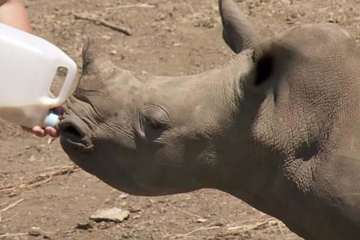 Rhino -orphan -page _2016_02_05