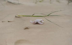 Tiny albino turtle hatches on Australian beach & heads for the ocean (PHOTOS)