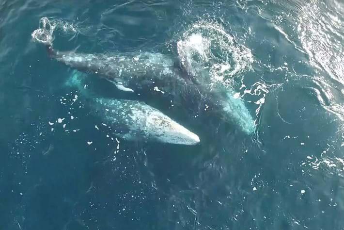 whales-pa-2016-2-17