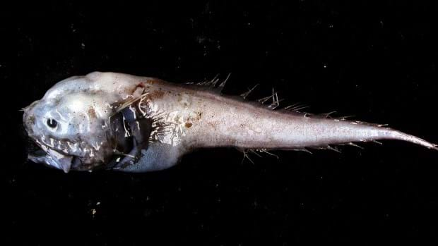 assfish-page-2016-2-18