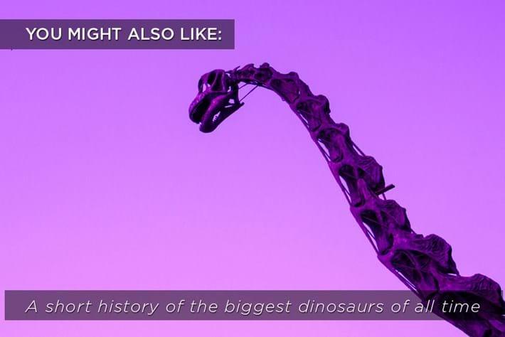 Dinosaur Skeleton Related Content 2016 02 24
