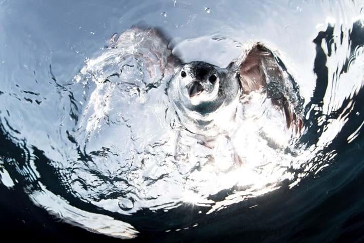 UPY-diving bird-2016-2-25