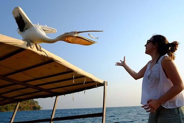 Big Bird On Boat 3 2016 02 26