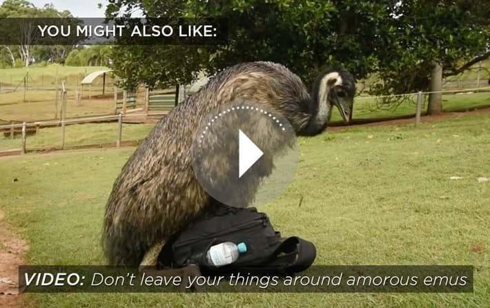 emu-related-2016-3-2