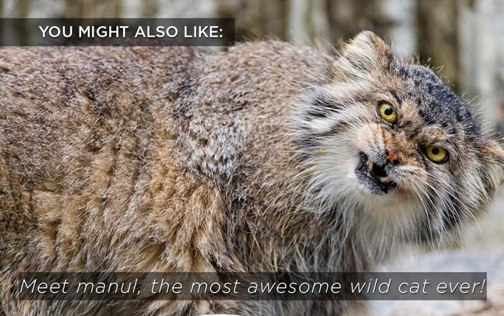 Related Content Manul 2016 03 11