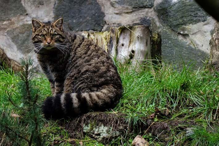 Wildcat -page _2016_03_13
