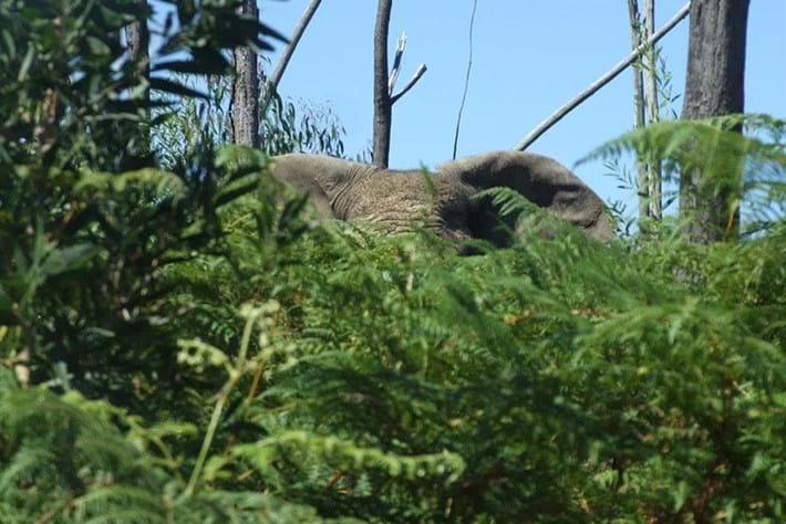 Knysna Elephant 2016 03 14