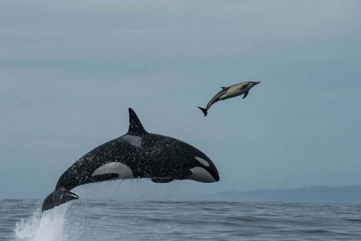 Orca -punt -page _2016_03_16