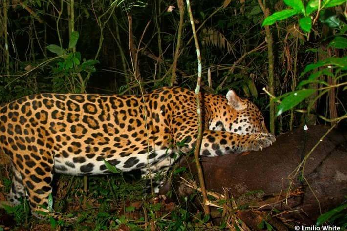 jaguar-3-2016-3-31
