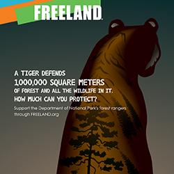Freeland Tiger