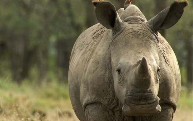 Gearing up for the first-ever World Youth Rhino Summit