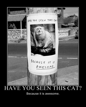 Awesome Cat Poster