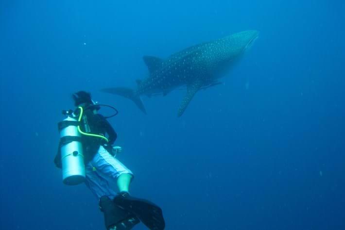 2014 02 19 Whale Shark
