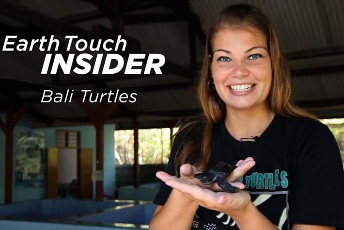 2014 02 19 Insider Bali Turtles Videothumb