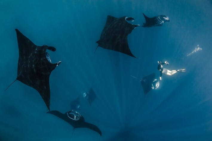 2014 02 21 Swimming With Manta Rays