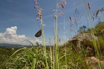 2014 02 24 Wolkberg Zulu Butterfly Scenic