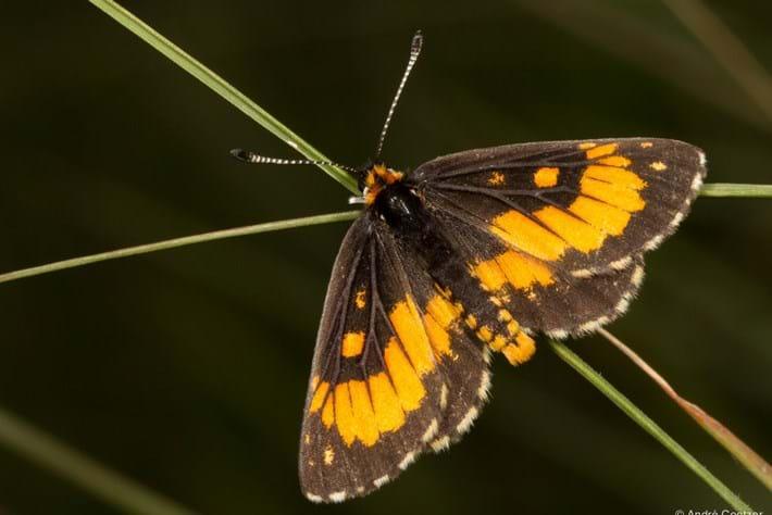 2014 02 24 Wolkberg Zulu Butterfly