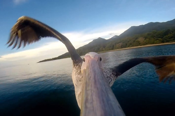 2014 03 03 Pelican Learns To Fly