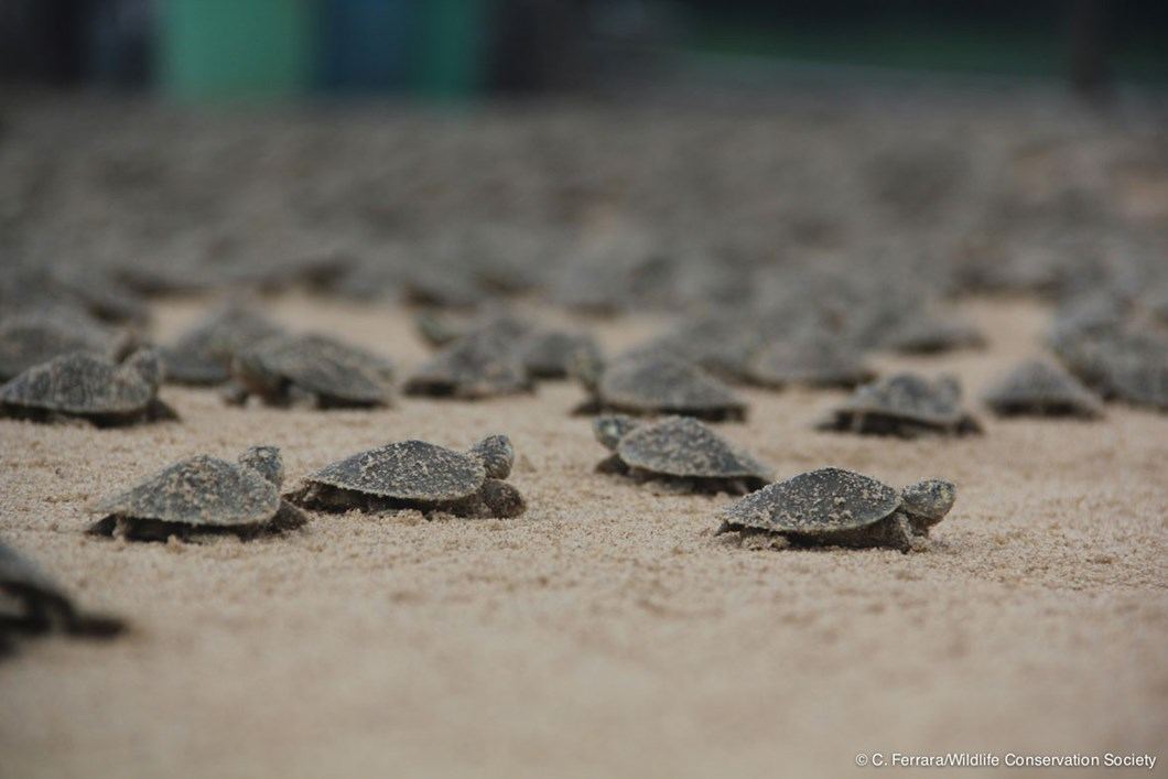 It's the turtle mother lode!