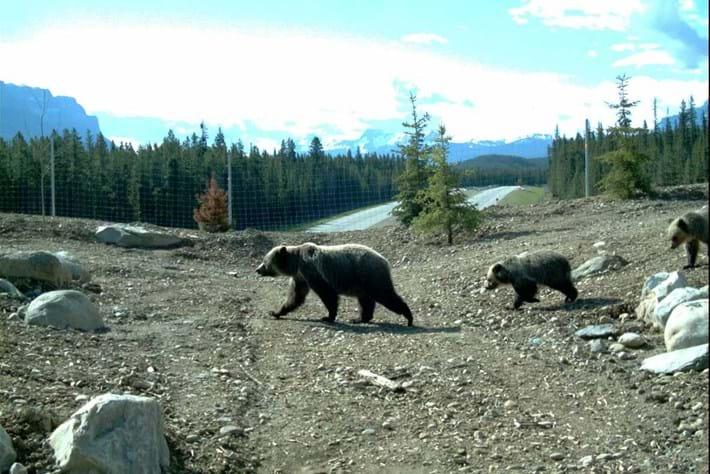 2014 03 10 Bears Crossing Overpass