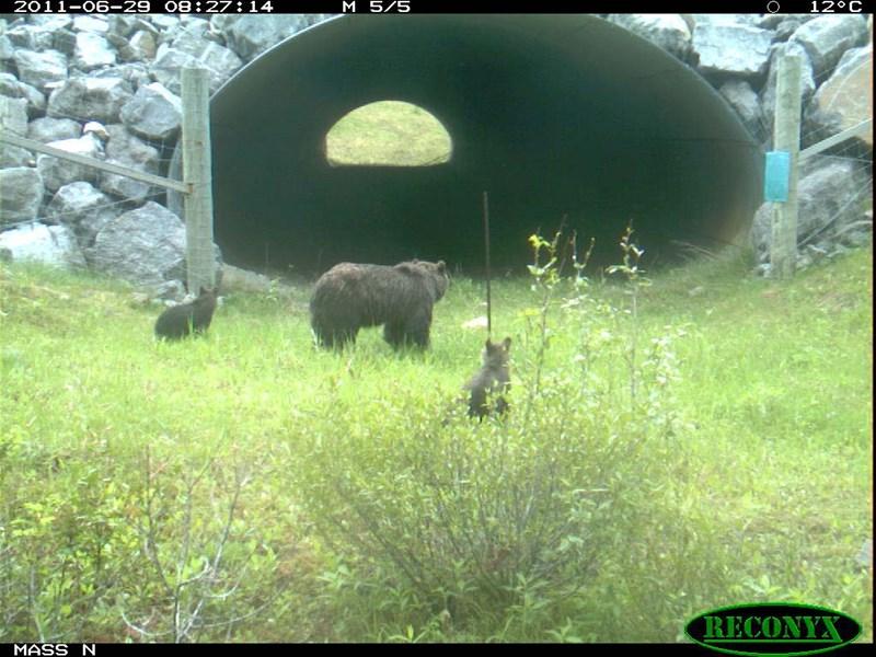 2014 03 10 Bears Crossing Underpass