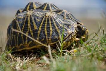 Geometric Tortoise 11 03 2014