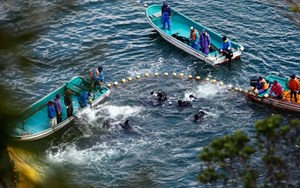 Leading zoo organisation faces court action over Taiji dolphin slaughter