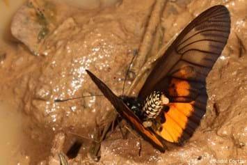 201 03 20 Butterflies Mudpuddling 2