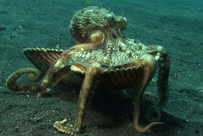 2014-03-27-Cleptopus Videothumb