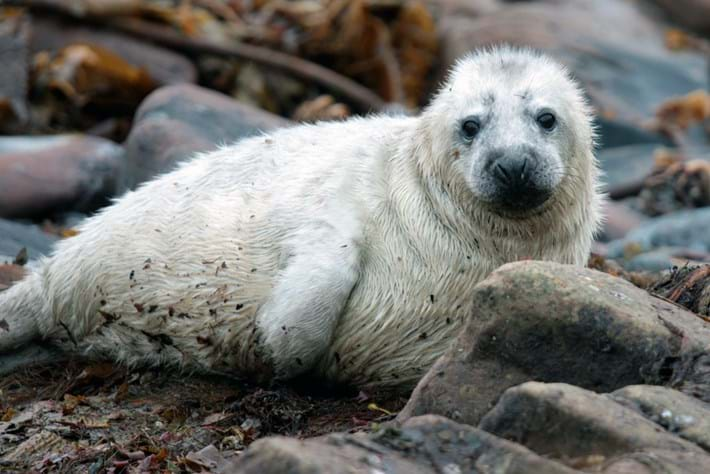 Seal Cam Page Image